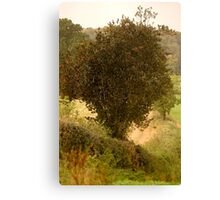 Holly, Loaded with Berries  ..... Canvas Print