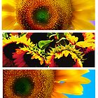 Sunflowers by Artondra Hall