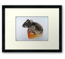 Dwarf Russian Hamster Framed Print