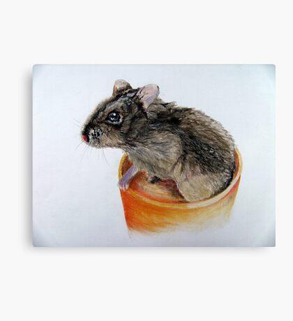 Dwarf Russian Hamster Canvas Print