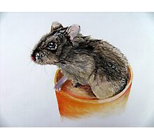 Dwarf Russian Hamster Photographic Print
