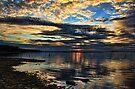 A  Busy Sky by Carolyn  Fletcher