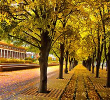 Boston, fall mood by LudaNayvelt