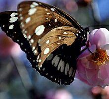 Macro Butterfly by Brooke Michelle