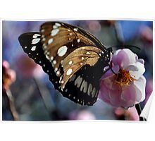 Macro Butterfly Poster