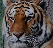 Big Kitty by sheena2015