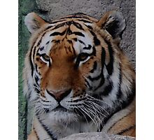 Big Kitty Photographic Print