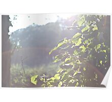 Light Flare In The Woods Poster