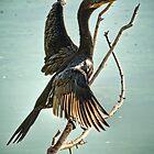Double Crested Cormorant  by Saija  Lehtonen