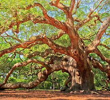 Angel Oak  by DCCastelhano