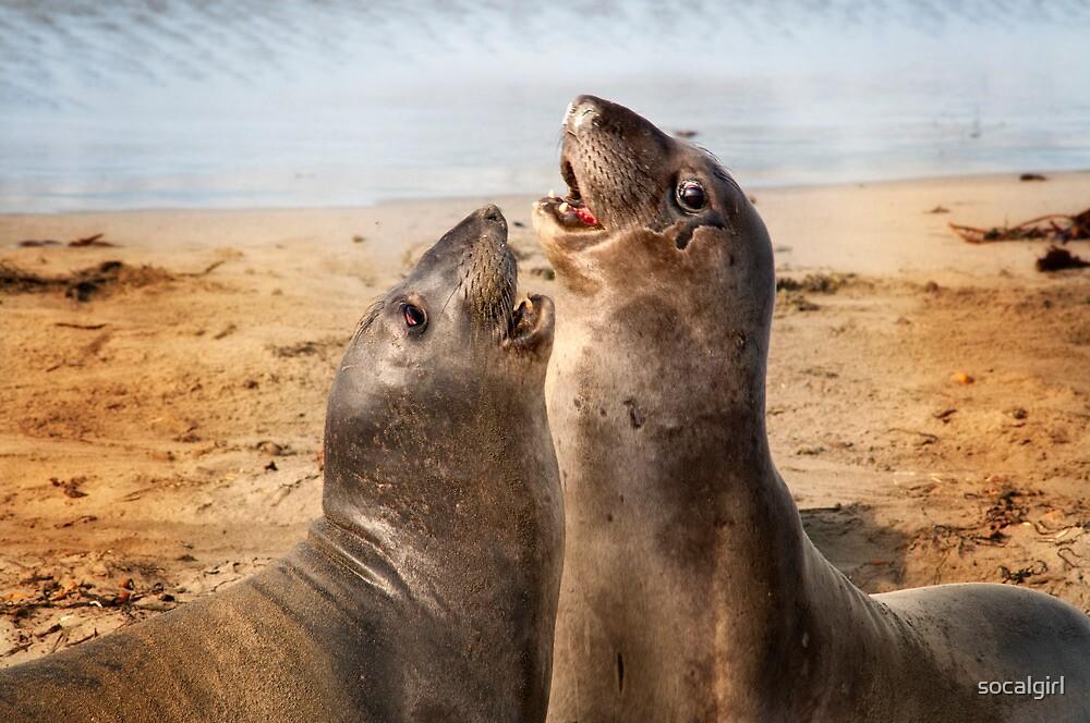 California Elephant Seals by socalgirl
