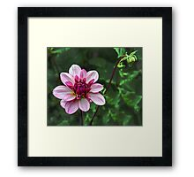 Nature's Beauty, God's Creation  Framed Print