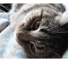Glamourous Cat Photographic Print