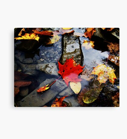 Leaves in the River  Canvas Print