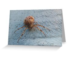 House spider Greeting Card