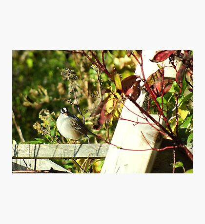 Fence Sitter Photographic Print
