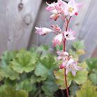 Pink Flora by BioticCrisis