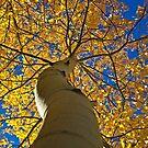 Tree Hugging by Katagram