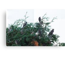 Fir Flock Canvas Print
