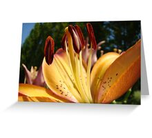 Lily Flower art prints Orange Floral Lilies Greeting Card