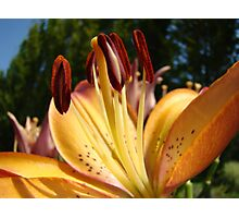 Lily Flower art prints Orange Floral Lilies Photographic Print