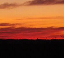 Field sunrise by BioticCrisis