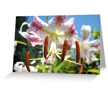 Lily Flower Closeup Floral art prints Pink Lilies Greeting Card