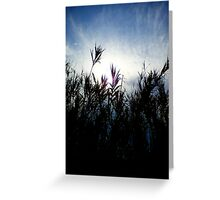 Moody Contre-Jour Greeting Card