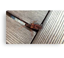 Wood Insect Canvas Print