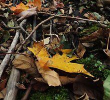 Leaf Litter Gold by BioticCrisis