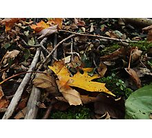 Leaf Litter Gold Photographic Print