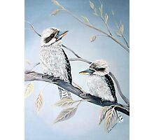 Cool Kookaburras Photographic Print