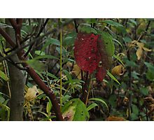 Foliage Rust Photographic Print
