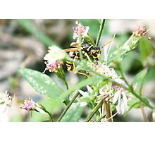 Pollinating Hunter Photographic Print