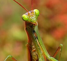 Praying Mantis by Betsy  Seeton