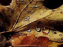 The Leaf ! by Elfriede Fulda