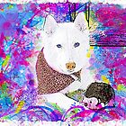 Watercolor Husky by AspenWillow