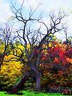 The Tree  by Marcia Rubin