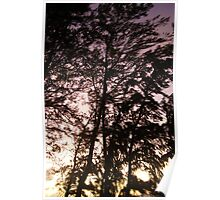Trees in the light of the morning Poster