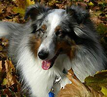 Sammy In The Leaves by jodi payne