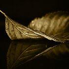 One Gold Leaf by EbyArts