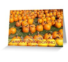 Pumpkin Patch Thanksgiving Greeting Card