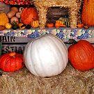 A White Pumpkin? by Eileen Brymer