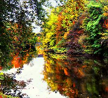 Duck Creek in the Fall  by Marcia Rubin
