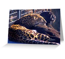 LEOPARDS Greeting Card
