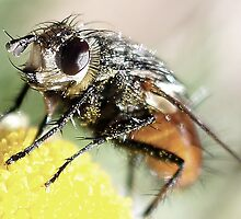 Some Sort of Fly? by Betsy  Seeton