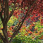 autumn window in Japanese Garden by TerrillWelch