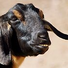 Goat by Betsy  Seeton