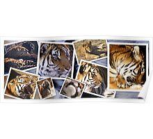 The Wild Animal Sanctuary in Colorado Poster
