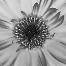 Challenge Entry /macro flower / BW by relayer51
